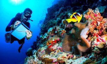 Deniz Biyolojisi Nedir?