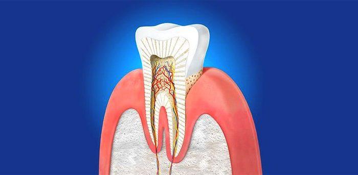Dentin Nedir?